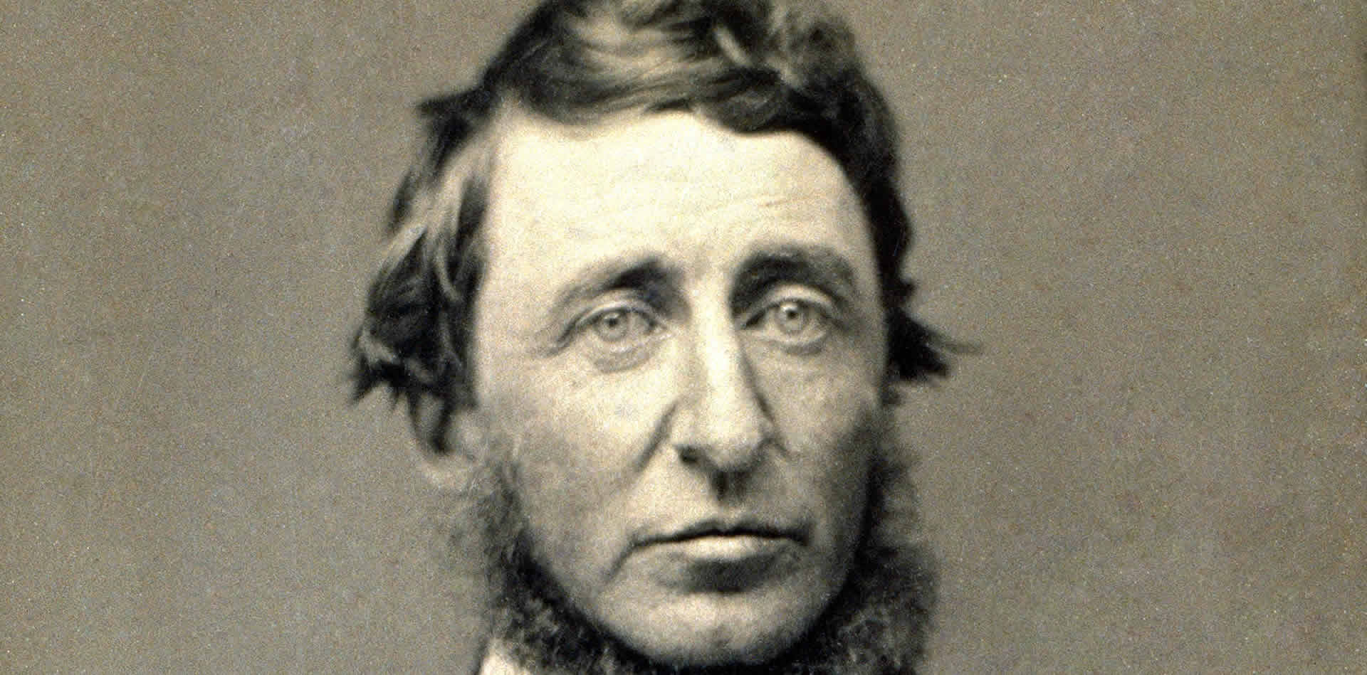 henry david thoreaus essay Essays and criticism on henry david thoreau - thoreau, henry david.